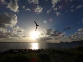 Anicee Lombal - Lord Howe Island