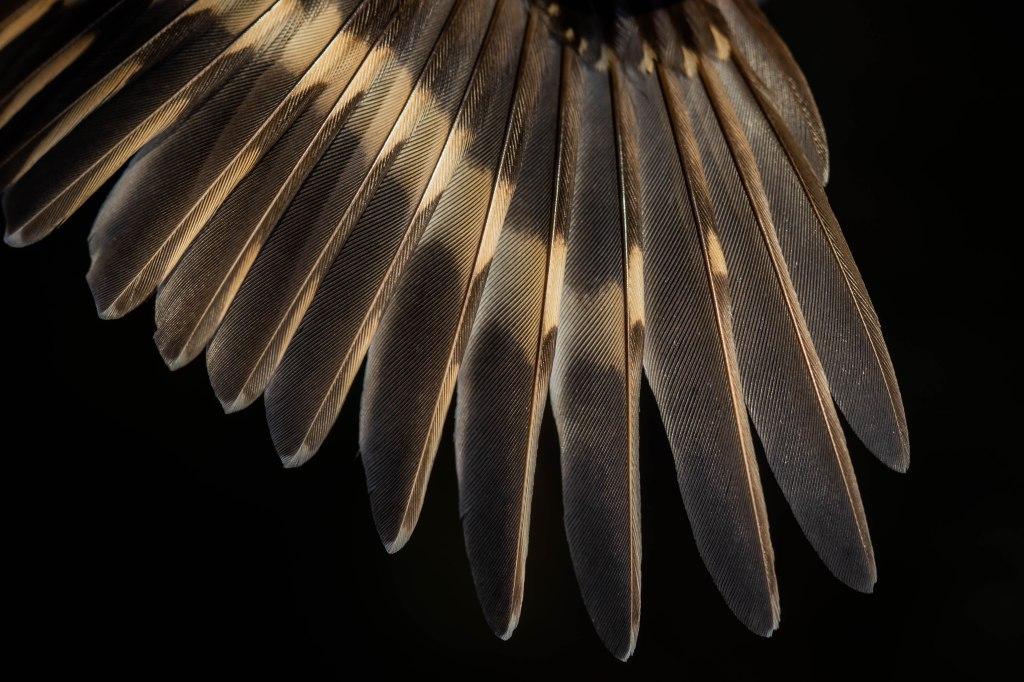 GJ's wing